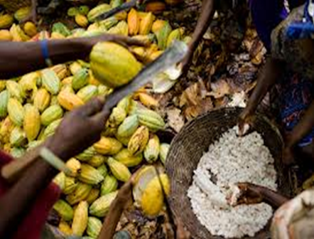 Europe flourishing in chocolate production, while African farmers struggle to make ends meet