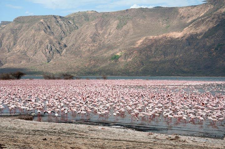 Lake Bogoria; of Healing Geysers and Flightless Flamingoes
