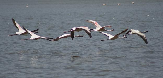 Lake Abijatta- Shalla the Great Rift Valley Lakes