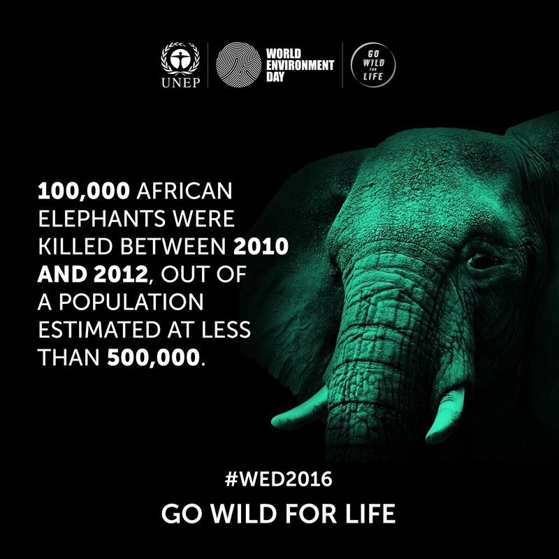 Angola: Illegal Wildlife Trade Higher Than Arms Smuggling